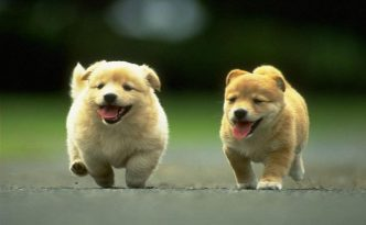 cute dog pics small dog hq