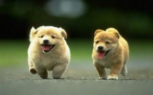 cute dogs 4